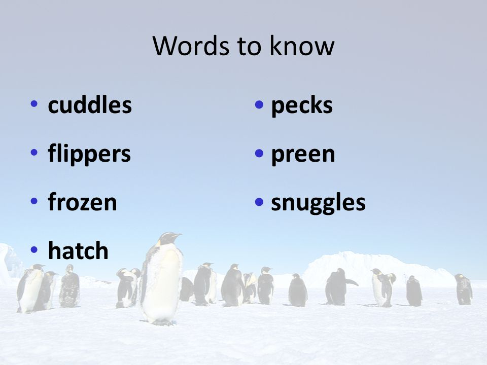 Words to know cuddles flippers frozen hatch pecks preen snuggles