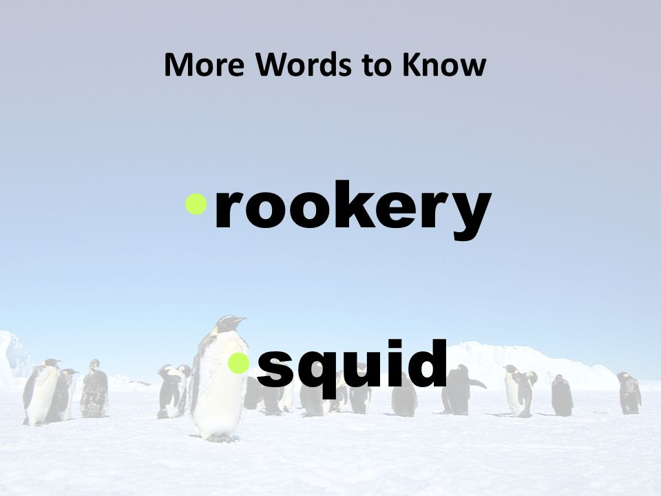 More Words to Know rookery squid