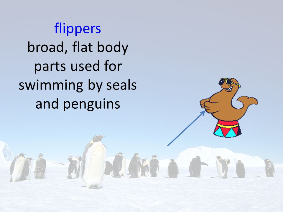 flippers broad, flat body parts used for swimming by seals and penguins