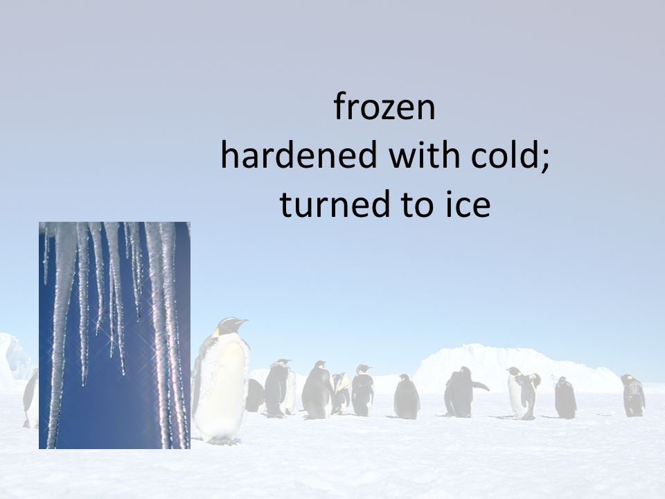 frozen hardened with cold; turned to ice