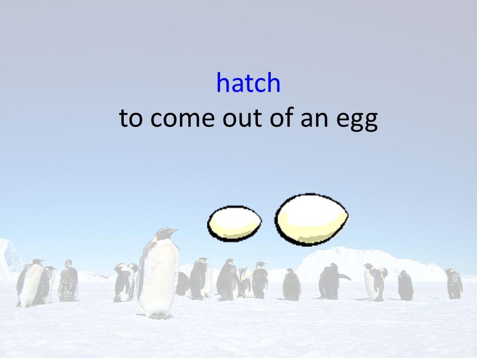 hatch to come out of an egg