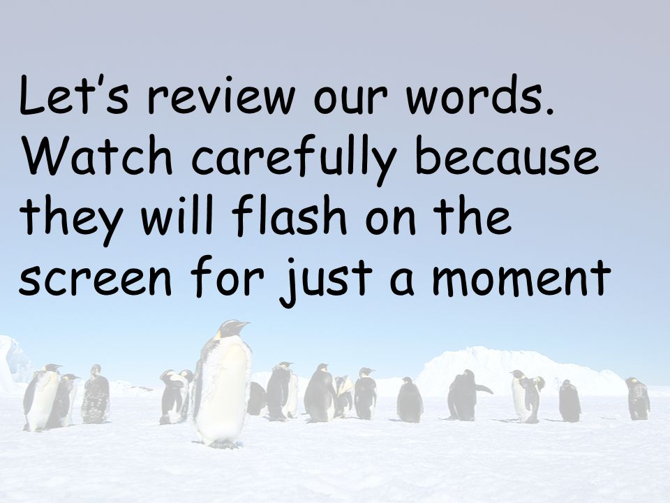 Let's review our words. Watch carefully because they will flash on the screen for just a moment