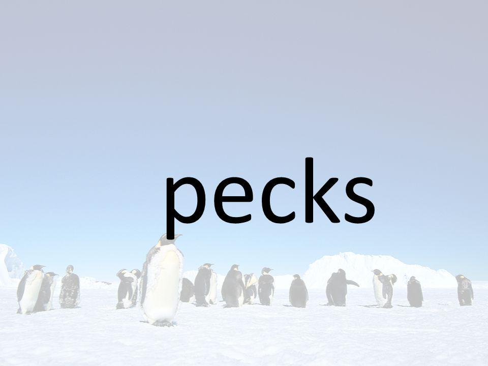 pecks