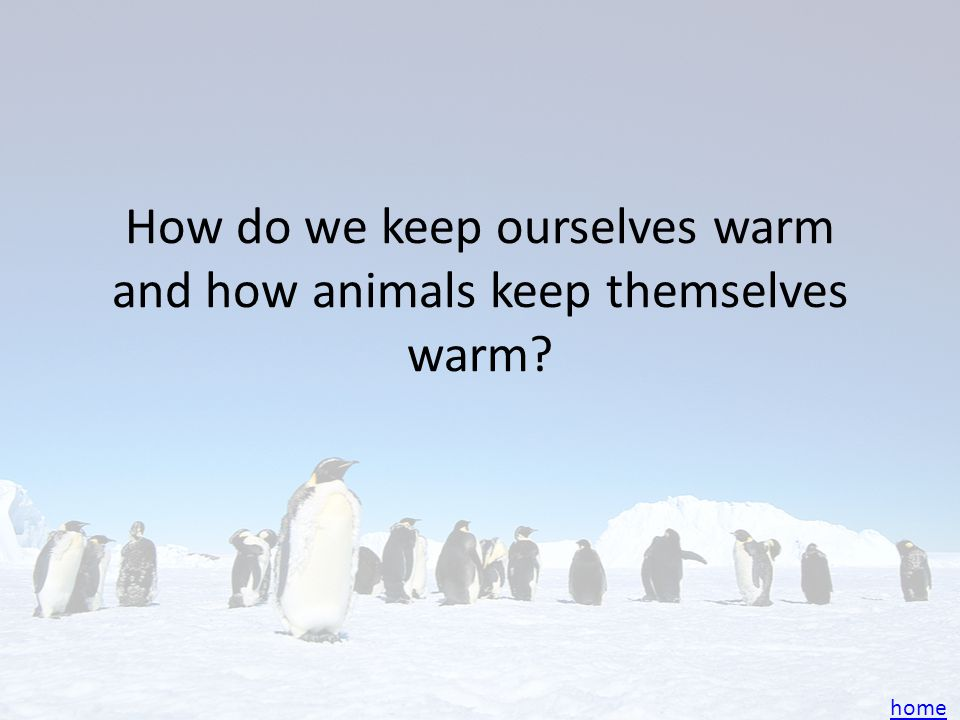 How do we keep ourselves warm and how animals keep themselves warm