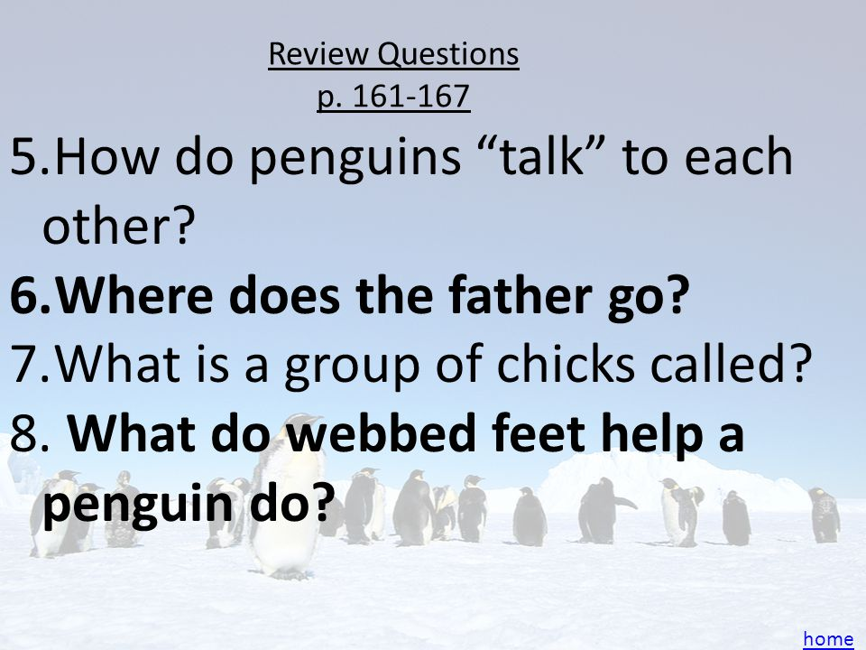 How do penguins talk to each other Where does the father go