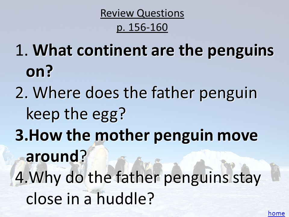 What continent are the penguins on