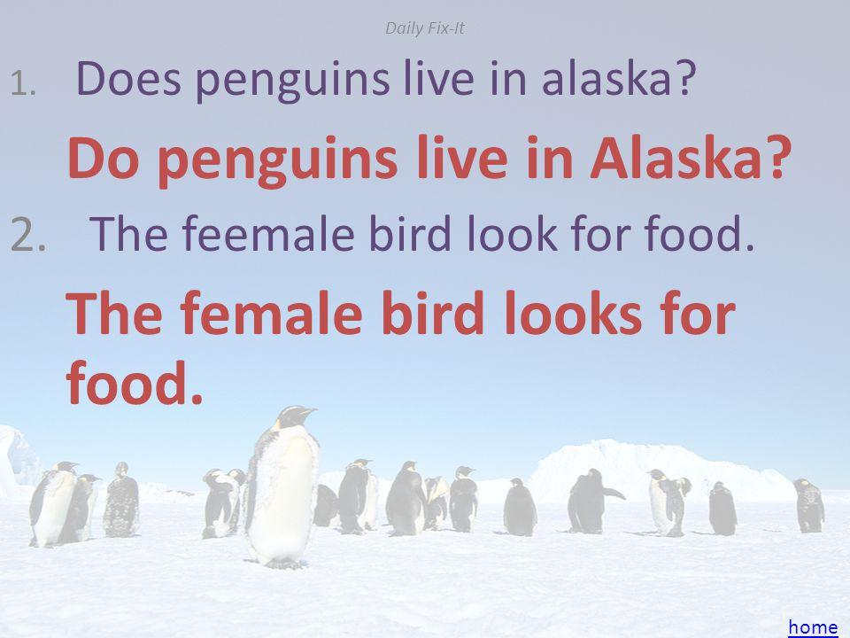 Do penguins live in Alaska