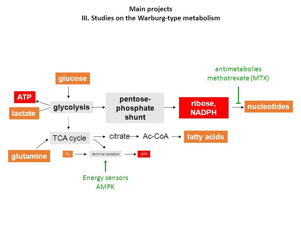 III. Studies on the Warburg-type metabolism pentose-phosphate shunt