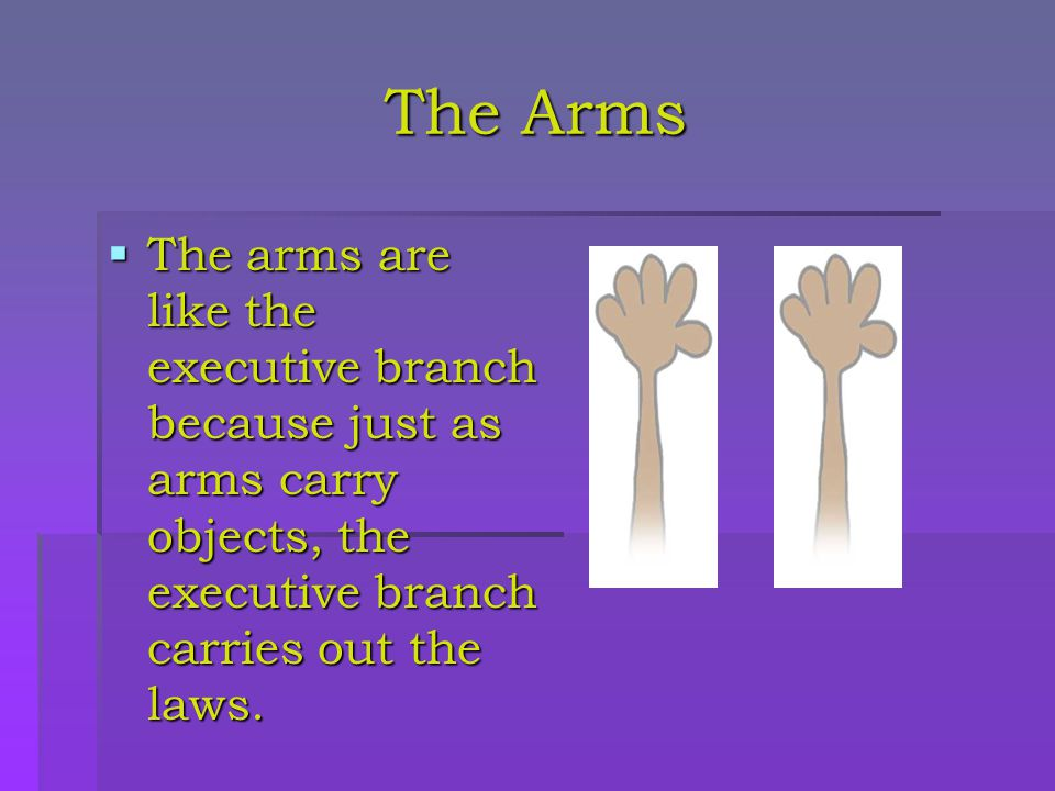 The Arms The arms are like the executive branch because just as arms carry objects, the executive branch carries out the laws.