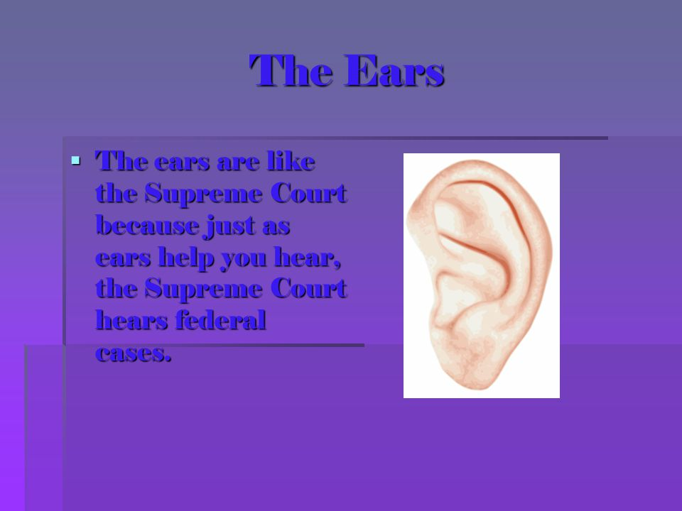 The Ears The ears are like the Supreme Court because just as ears help you hear, the Supreme Court hears federal cases.