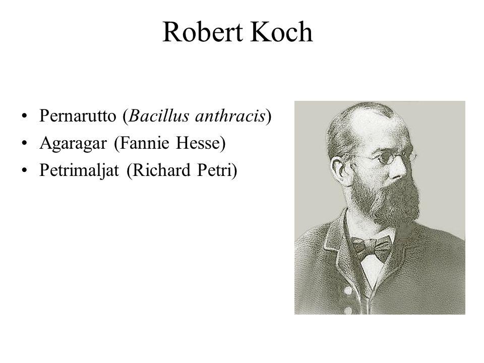 Robert Koch Pernarutto (Bacillus anthracis) Agaragar (Fannie Hesse)