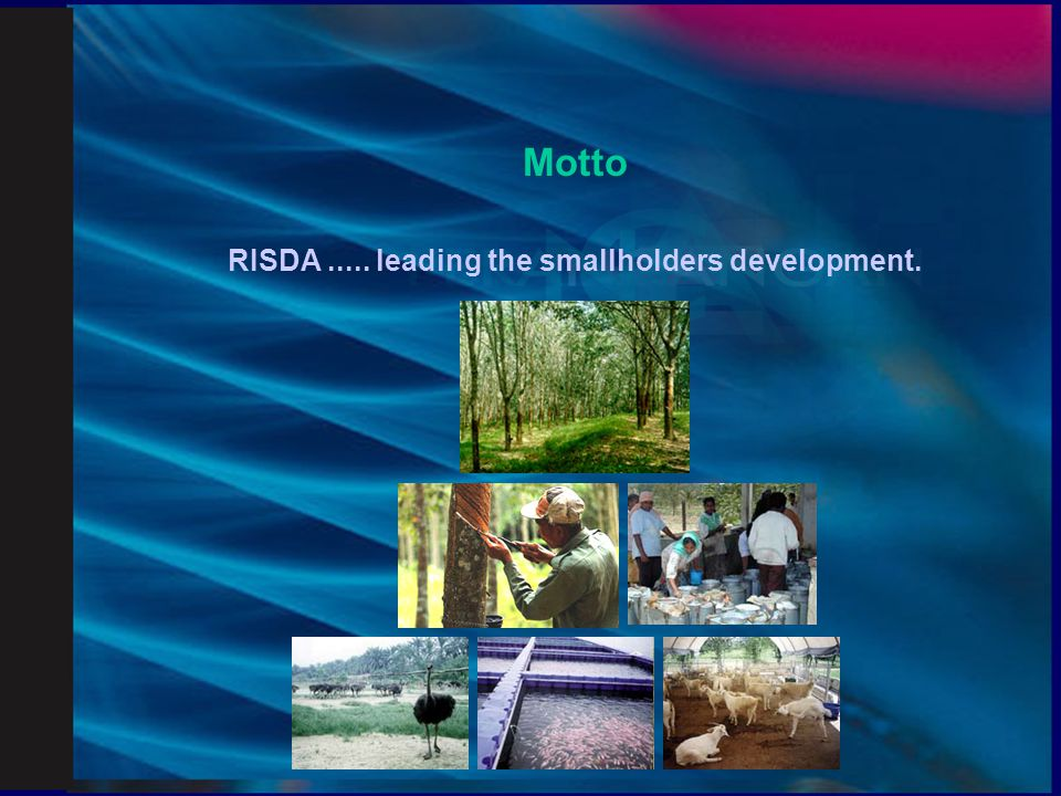 RISDA ..... leading the smallholders development.