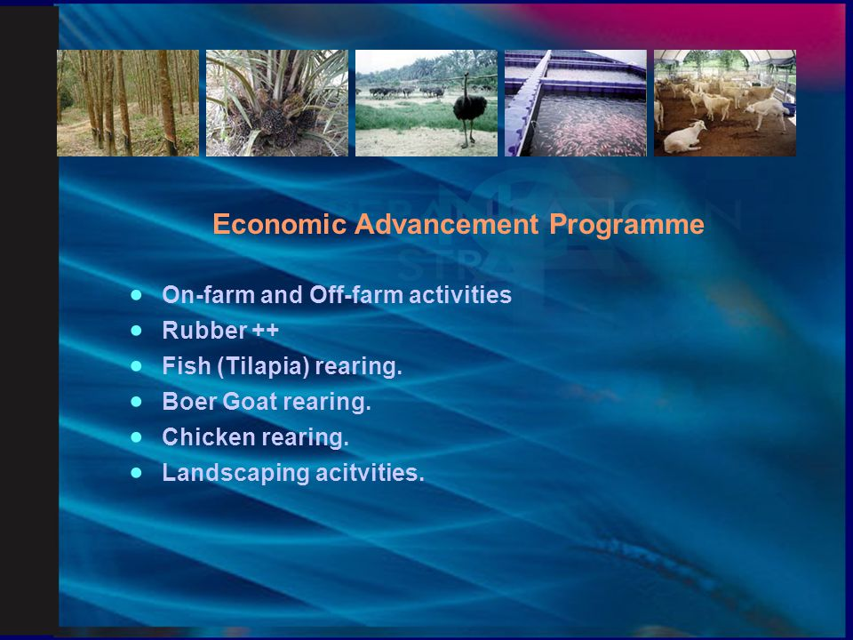 Economic Advancement Programme