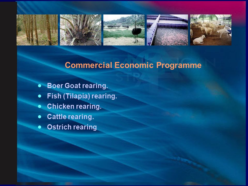 Commercial Economic Programme