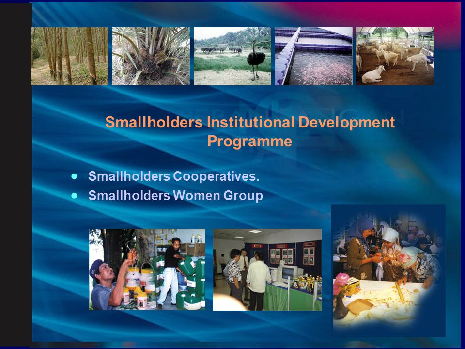 Smallholders Institutional Development Programme