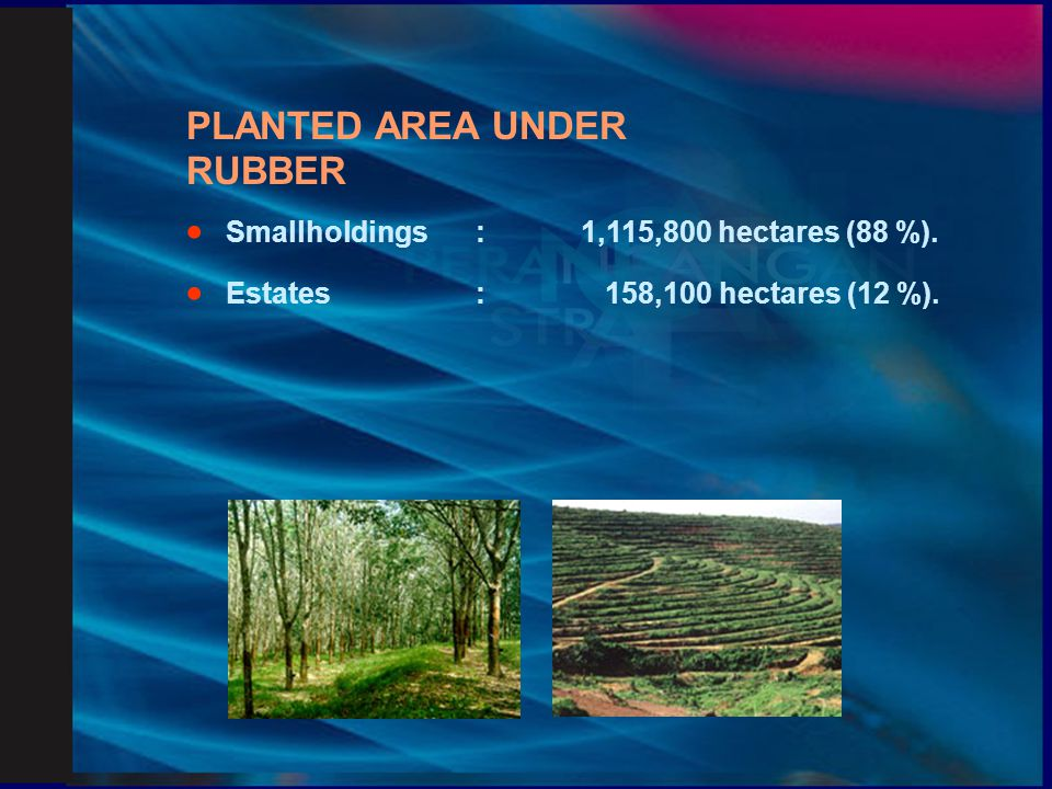 PLANTED AREA UNDER RUBBER