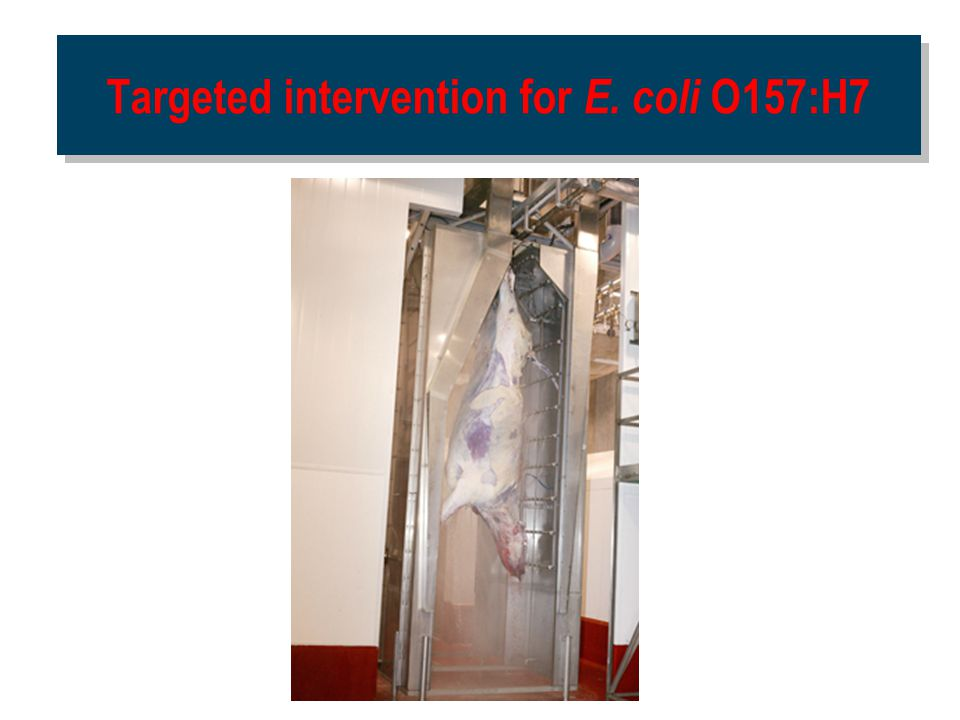 Targeted intervention for E. coli O157:H7