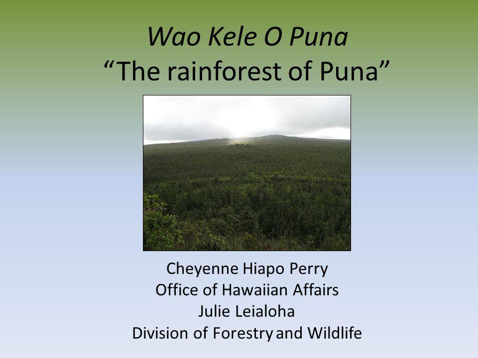Wao Kele O Puna The rainforest of Puna