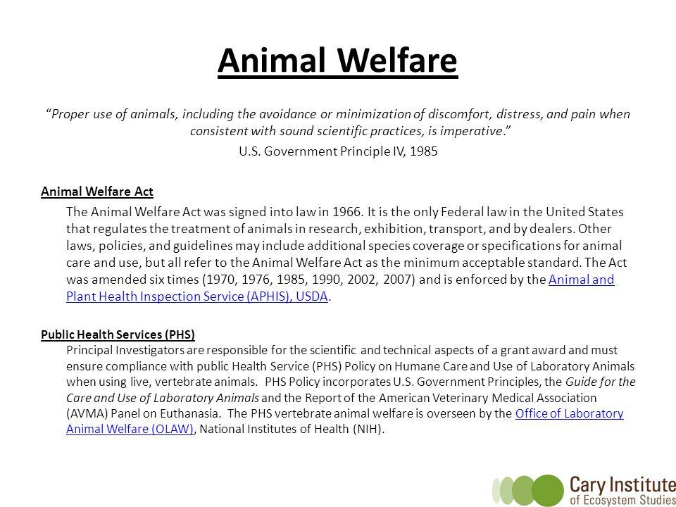 U.S. Government Principle IV, 1985