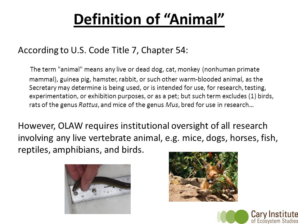 Definition of Animal