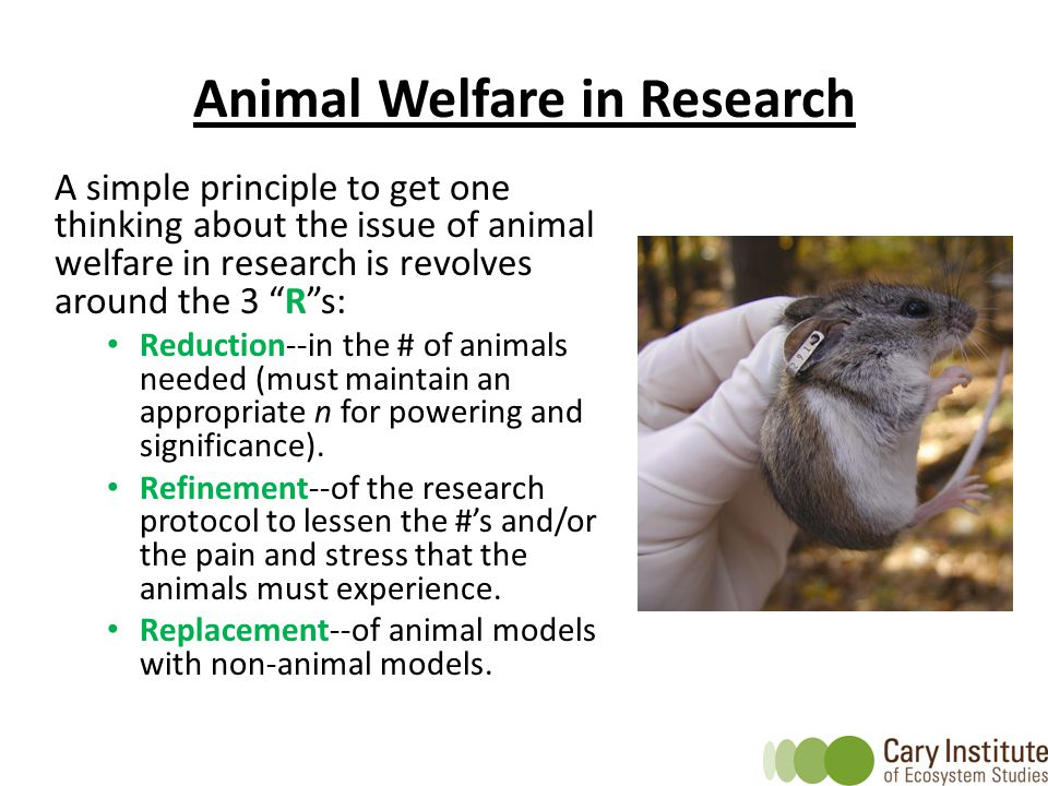 Animal Welfare in Research