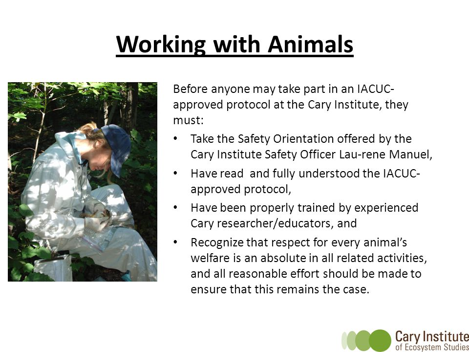 Working with Animals Before anyone may take part in an IACUC-approved protocol at the Cary Institute, they must: