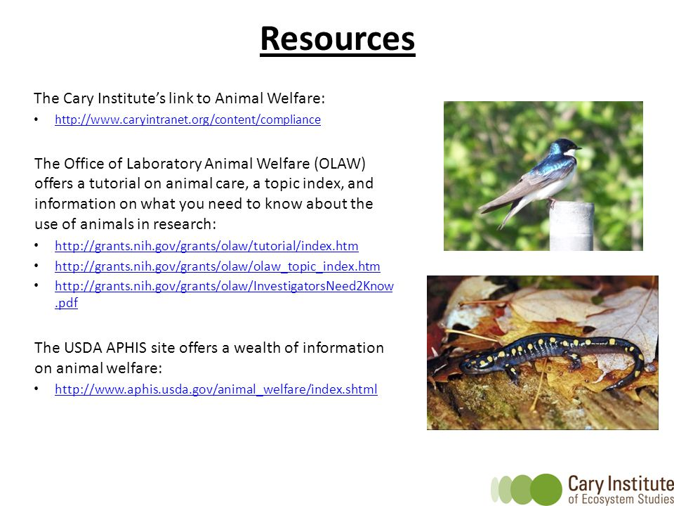 Resources The Cary Institute's link to Animal Welfare: