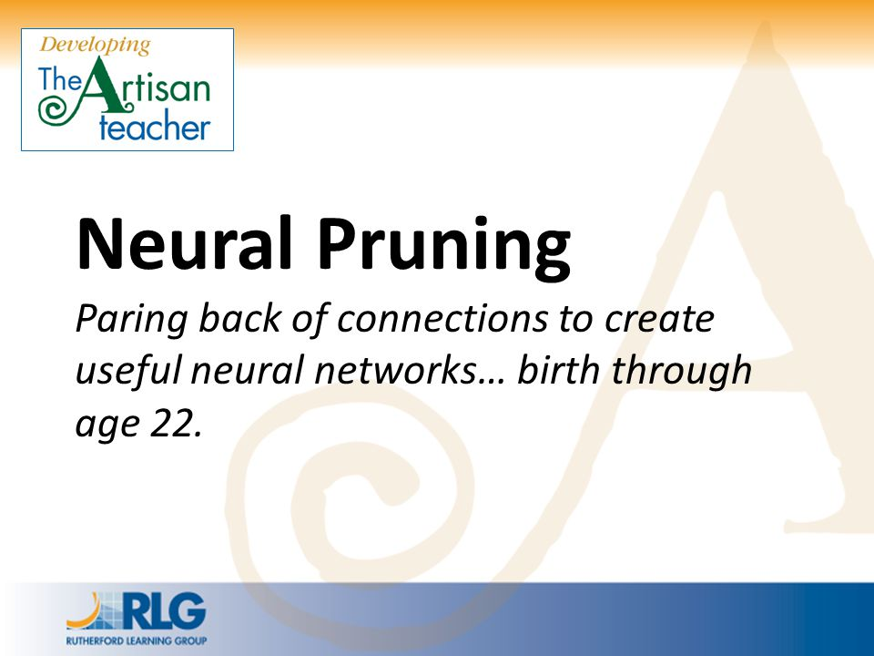 Neural Pruning Paring back of connections to create useful neural networks… birth through age 22.