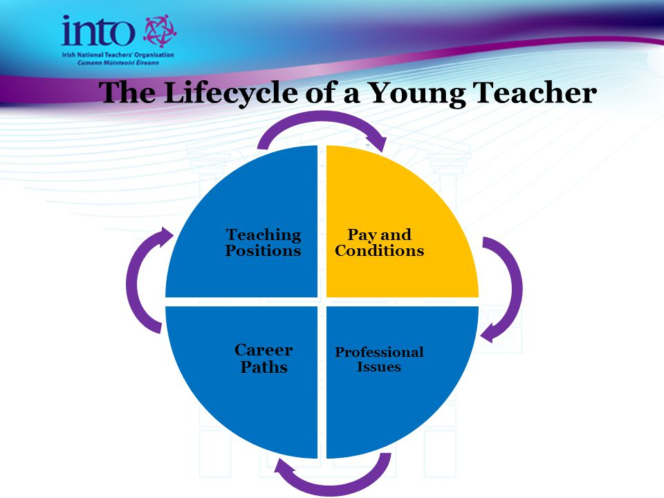 The Lifecycle of a Young Teacher