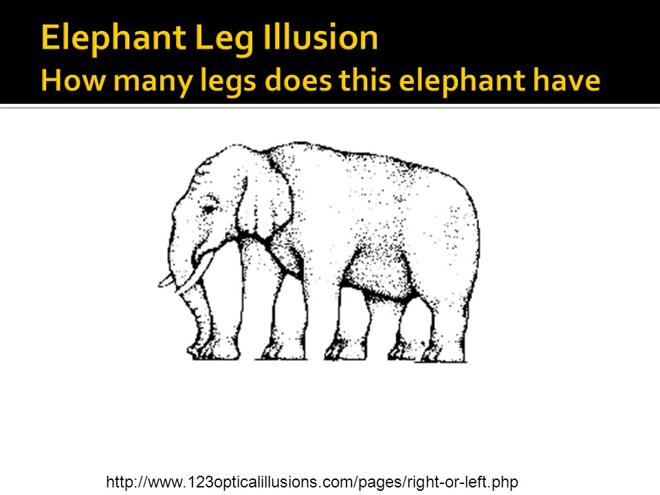 Elephant Leg Illusion How many legs does this elephant have