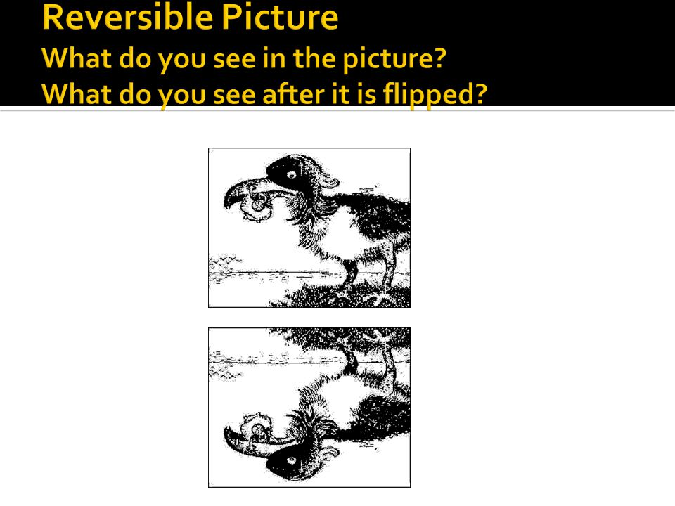 Reversible Picture What do you see in the picture