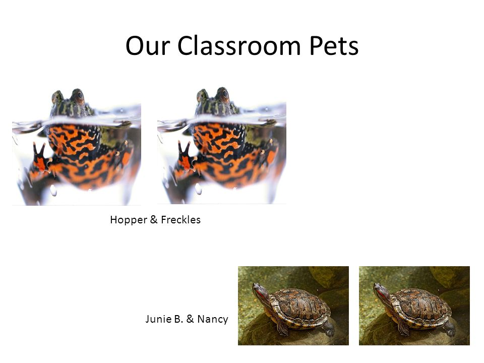 Our Classroom Pets Hopper & Freckles Junie B. & Nancy