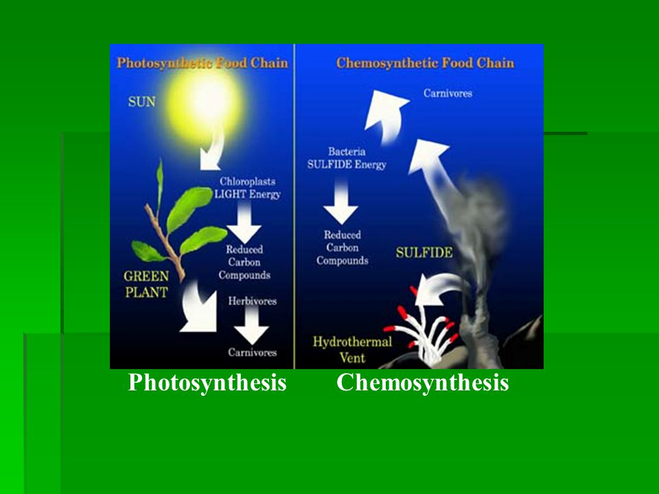 chemosynthesis in the deep sea Most life on earth is dependent upon photosynthesis, the process by which plants make energy from sunlight however, at hydrothermal vents in the deep ocean a unique ecosystem has evolved in the absence of sunlight, and its source of energy is completely different: chemosynthesis chemosynthesis is the process by.