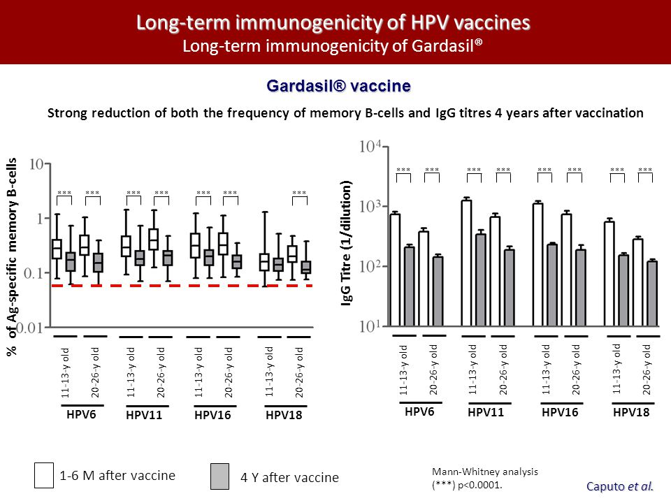 Long-term immunogenicity of HPV vaccines