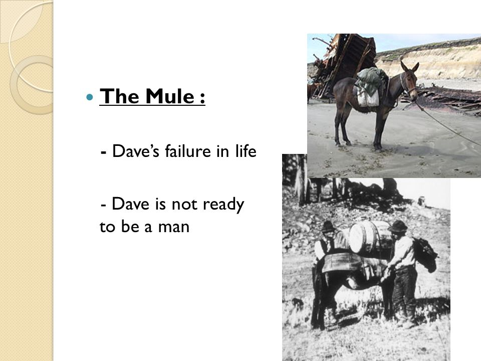 The Mule : - Dave's failure in life - Dave is not ready to be a man