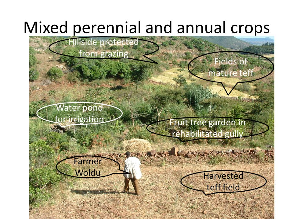 Mixed perennial and annual crops
