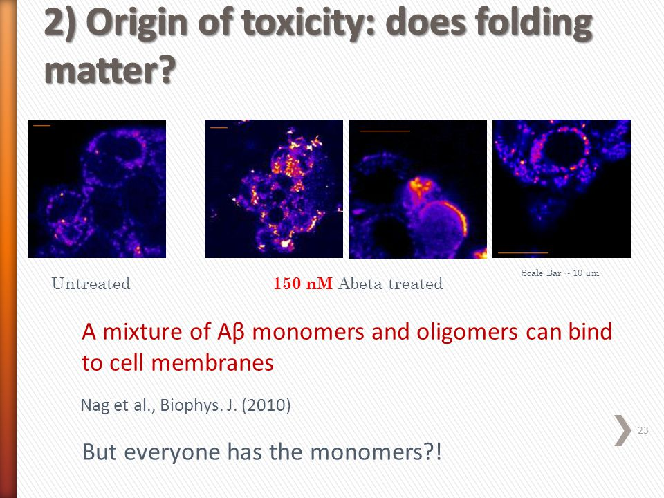 2) Origin of toxicity: does folding matter