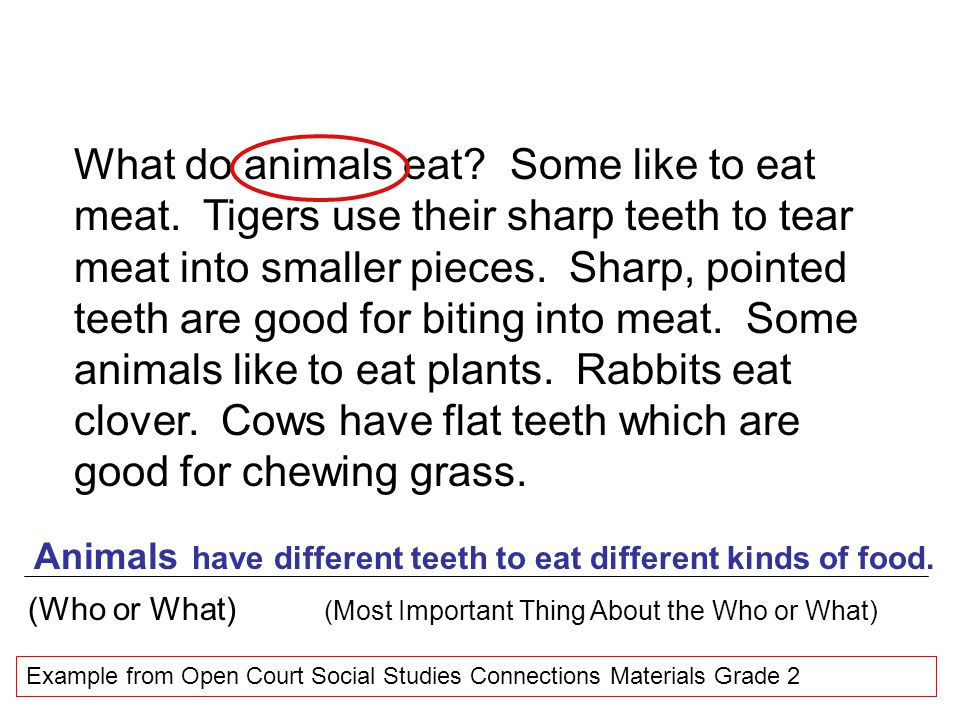 What do animals eat. Some like to eat meat