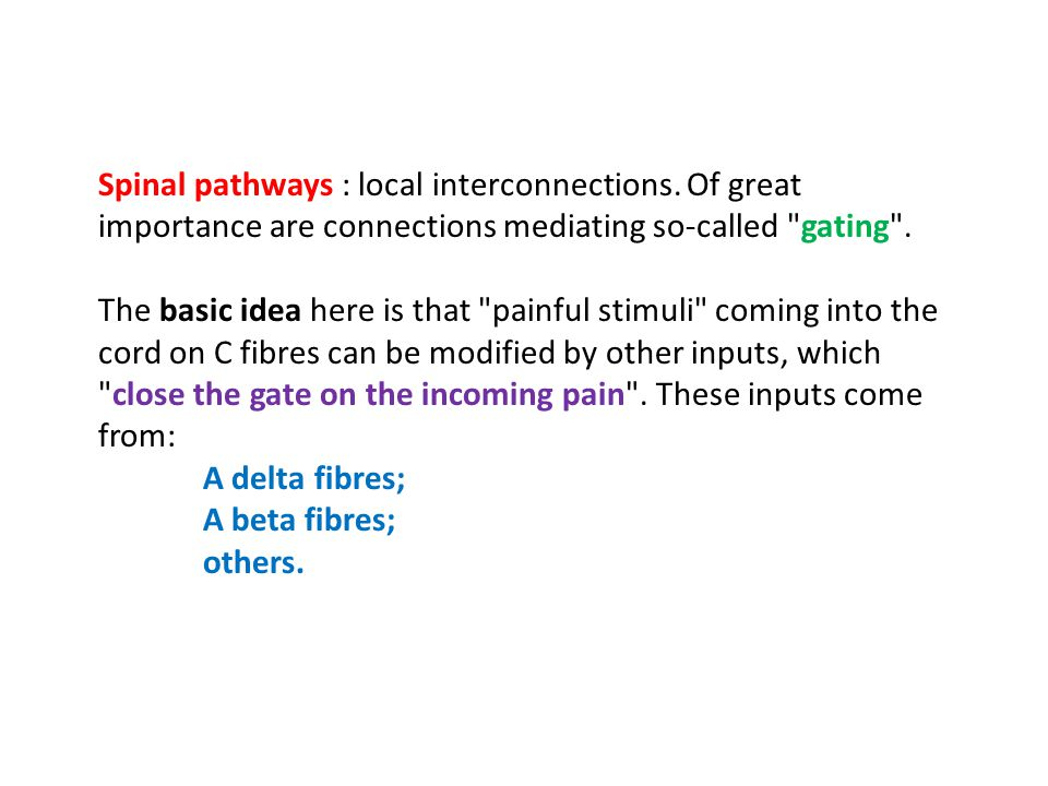 Spinal pathways : local interconnections