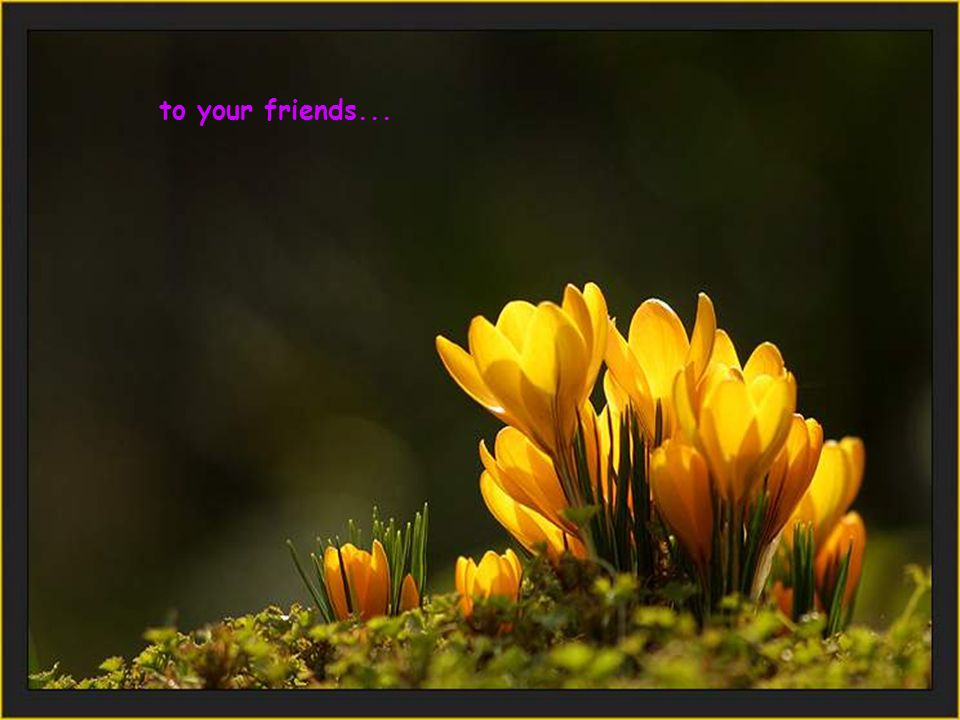 to your friends...