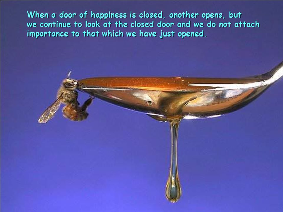 When a door of happiness is closed, another opens, but