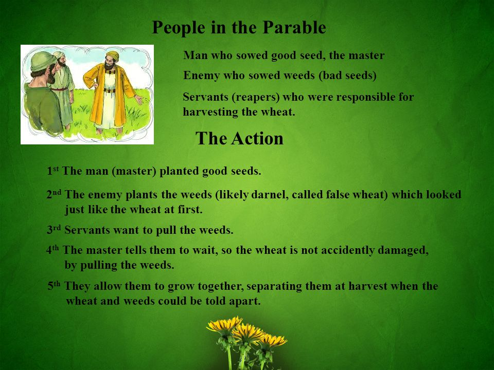 People in the Parable The Action Man who sowed good seed, the master