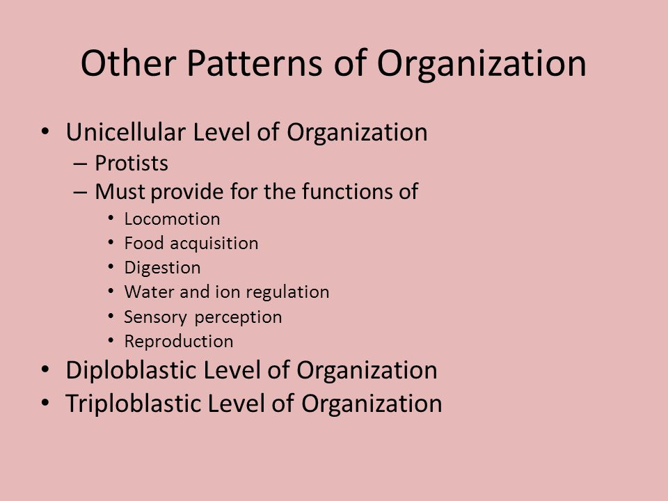 Other Patterns of Organization