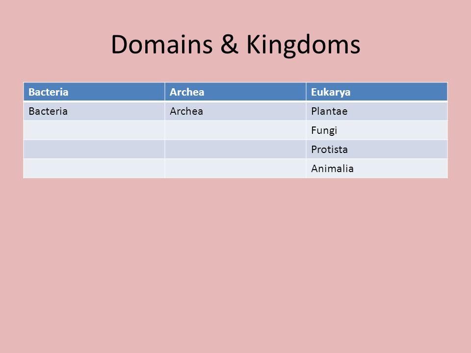 Domains & Kingdoms Bacteria Archea Eukarya Plantae Fungi Protista