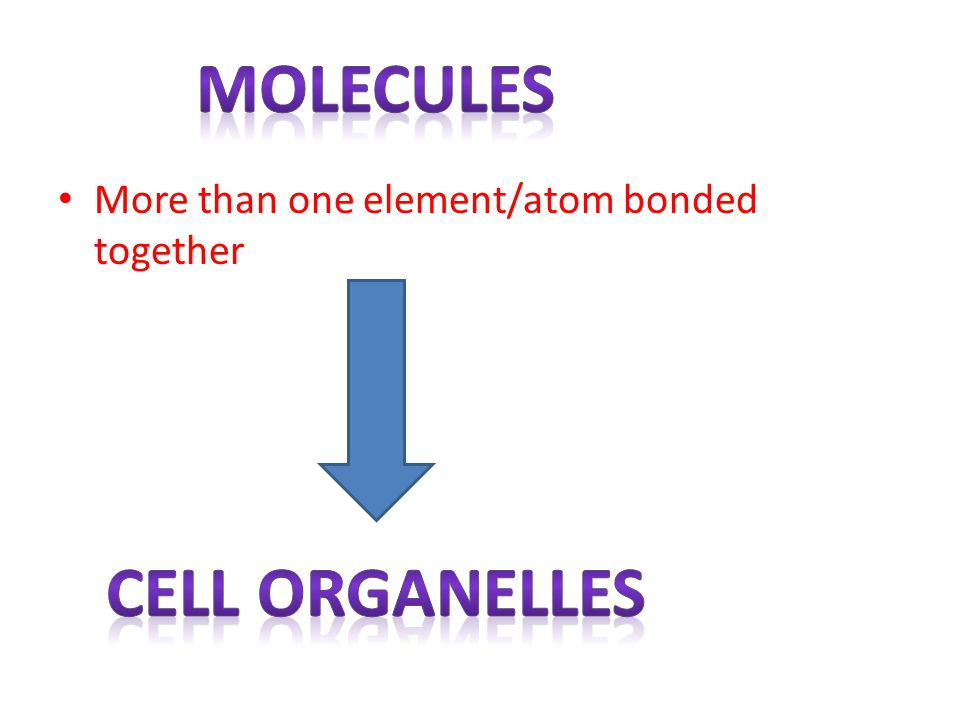 Molecules Cell organelles