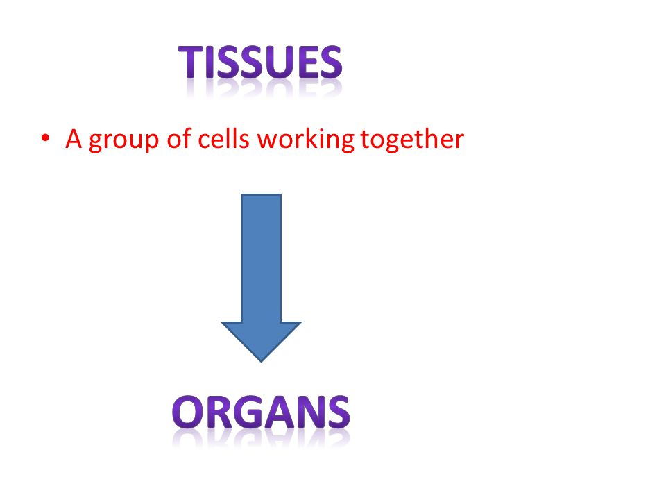 tissues A group of cells working together organs