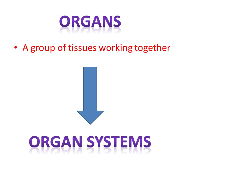 organs A group of tissues working together Organ systems