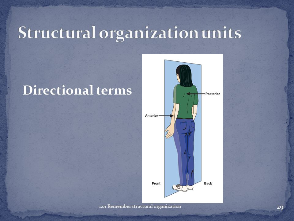 Structural organization units