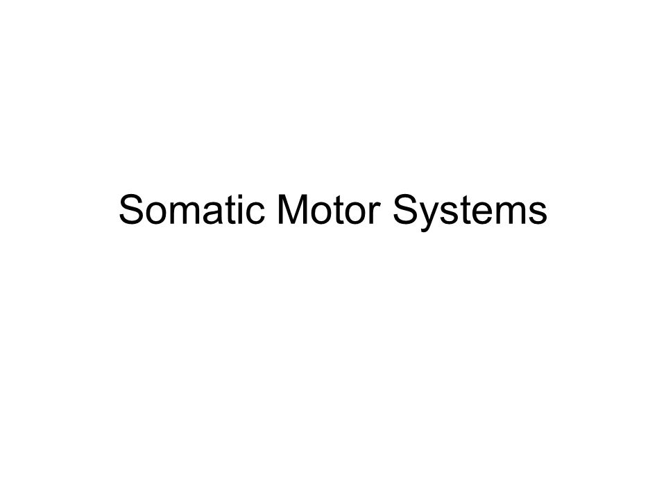 Somatic Motor Systems