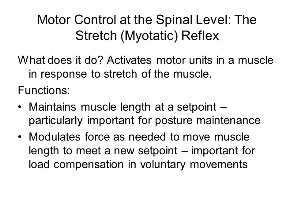 Motor Control at the Spinal Level: The Stretch (Myotatic) Reflex